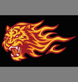 tiger roaring head fire burning flame logo vector image vector image