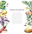 Watercolor collection of fresh herbs and spices vector image vector image