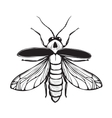 Firefly Insect Black Inky Drawing vector image