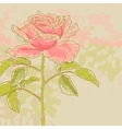 Pink rose on toned background vector image vector image