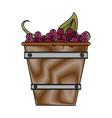 grapes in bucket vector image vector image