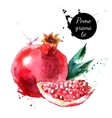 Hand drawn watercolor painting pomegranate on vector image