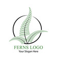 leaf of a green fern logo vector image vector image