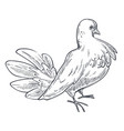 pigeon or dove bird hand drawn sketch vector image