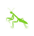 praying mantis vector image