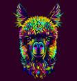 alpaca llama portrait abstract portrait