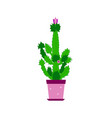 cactus isolated with flowers vector image