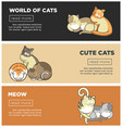 cats world and kittens pets web banners playing or vector image vector image