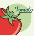 tomato vegetable cartoon vector image