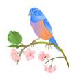 bird bluebird thrush small songbirdons carddecora vector image vector image