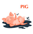 educational flashcard pig sporting in a mud puddle vector image vector image