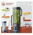 Health And Medical Otolaryngology Anatomy vector image