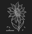 ripe sunflower with big blossom and seeds vector image