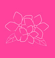 hand draw brush flower on pink background vector image