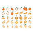 orange fruit collection set graphic design vector image