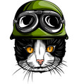 portrait of a cat with steampunk helmet vector image