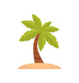 palm tree tropical plant on a vector image