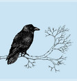 raven pen drawing vector image
