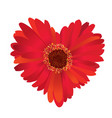 red flower with love heart shape vector image