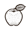 sketch red apple with leaf coloring book vector image vector image