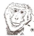 Chimpanzee drawing Animal artistic use vector image
