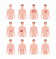internal organs placed on man body silhouettes vector image vector image
