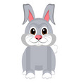 isolated cute rabbit vector image vector image