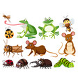 set of animals and insects vector image