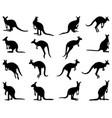 silhouettes kangaroo vector image vector image