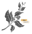 tea branch silhouette vector image vector image