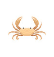 beige crab with five pairs of legs sea creature vector image