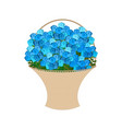 blue roses basket large bouquet of flowers vector image