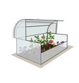 garden open greenhouse with a crop tomatoes vector image vector image