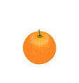 Photo-realistic Orange Fruit Isolated vector image vector image