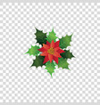red poinsettia flower with green leaves - colorful vector image vector image