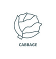 cabbage line icon cabbage outline sign vector image vector image