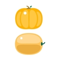 Fresh orange pumpkin isolated vector image vector image