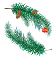 pine branch with cones and toy vector image vector image