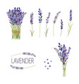 set of lavender flowers elements collection vector image vector image
