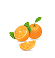 Set Orange Fruits Cut and Slices vector image