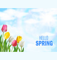 tulips flowers beautiful spring vector image vector image