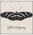 Zebra longwing butterfly card vector image