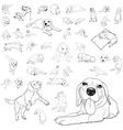 drawing set adorable beagle dog vector image vector image