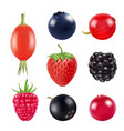 set of berries realistic pictures of fresh fruits vector image vector image