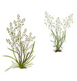 bouquets meadow field herbs objects on a white vector image vector image