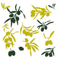 olive branches flat vector image vector image