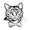 portrait a cat cute kitten black white vector image vector image