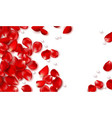 red rose petals and beads on white background vector image