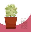 sedum hintonii plant in pot banner vector image vector image