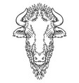 A buffalo head design on white
